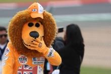Marshal Bear