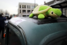 Tortoise - Ford